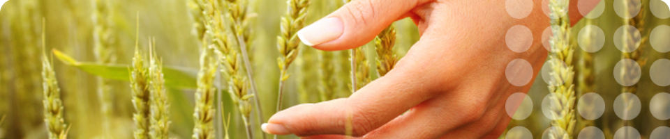 Image of Hand in Wheat